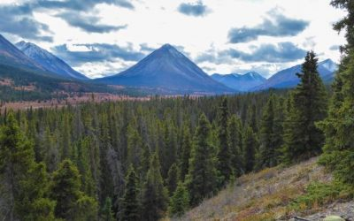 4 Simple Pack Essentials for a Northern BC Wilderness Hunt