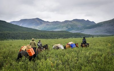 5 Common Questions About Hunts in Northern British Columbia