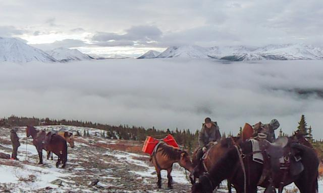 You Can Still Hunt Moose, Caribou or Stone Sheep in 2018
