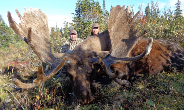 2016 B.C. Moose Recap from Kawdy Outfitters