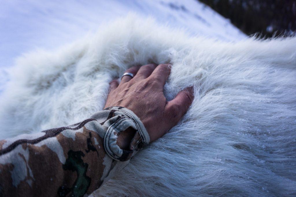 British Columbia Hunt
