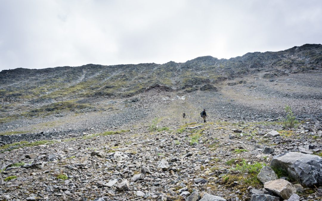 Setting Expectations for a Mountain Goat Hunt